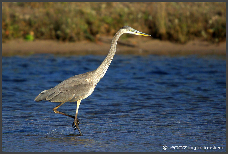 Sandhill Crane in Michigan | The Michigan Nature Guy's Blog